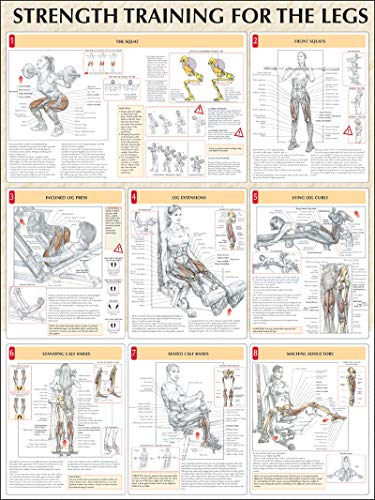 strength-training-for-the-legs-poster-strength-training-anatomy