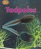 Theresa Greenaway: Tadpoles (Minipets)