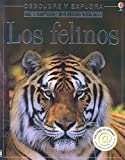 Miller, Jonathan S.: Los Felinos / Big Cats: Internet Linked (Descubre Y Explora) (Spanish Edition)