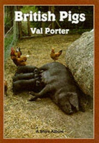 british-pigs-shire-album-s