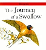 Scrace, Carolyn: The Journey of a Swallow (Lifecycles)