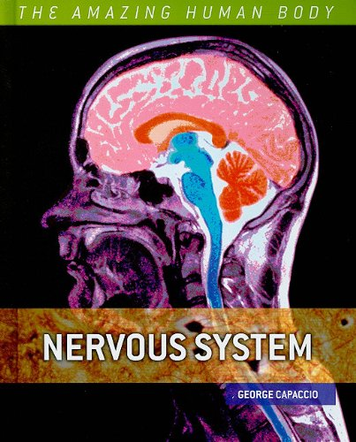 nervous-system-the-amazing-human-body