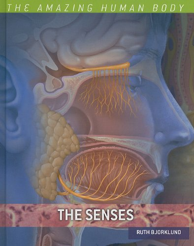 the-senses-the-amazing-human-body
