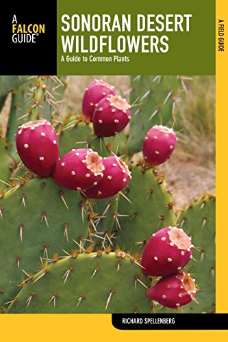 sonoran-desert-wildflowers-a-guide-to-common-plants-wildflower-series