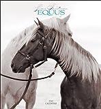 Friedman, Susan: Equus 2014 Calendar