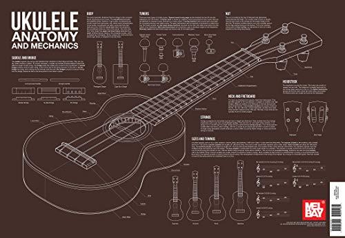 ukulele-anatomy-and-mechanics