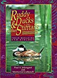 Johnsgard, Paul A.: Ruddy Ducks &amp; Other Stifftails: Their Behavior and Biology