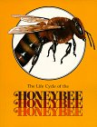 Hogan, Paula Z.: The Life Cycle of the Honeybee (Life Cycles (Raintree Paperback))