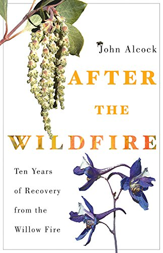 after-the-wildfire-ten-years-of-recovery-from-the-willow-fire