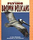 Anne Welsbacher: Flying Brown Pelicans (Pull Ahead Books)