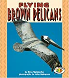 Welsbacher, Anne: Flying Brown Pelicans