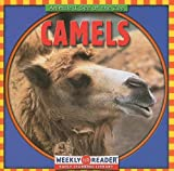Macken, Joann Early: Camels