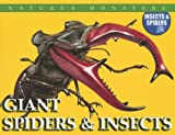 McNab, Chris: Giant Spiders & Insects: Giant Spiders And Insects