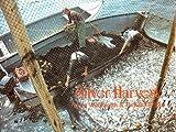 Wilbur, Richard: Silver Harvest: The Fundy Weirmen's Story