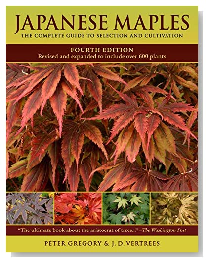japanese maple tree meaning. japanese maple tree types. on