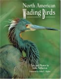 Netherton, John: North American Wading Birds (Wildlife)
