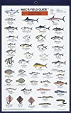 Craig MacGowan: Northeast Coastal Fish (Mac's Guides) (Laminated Card)