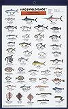 Craig MacGowan: Northeast Coastal Fish (Mac's Guides) (Laminated Card)