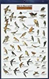Craig MacGowan: Mac's Field Guide To Southern California Park and Garden Birds (Mac's Guides (Flash Cards))