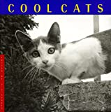 Martin, Jane: Cool Cats