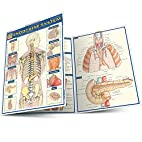 Endocrine System by BarCharts Inc.