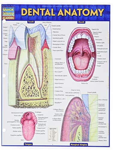 dental-anatomy-quick-study-academic