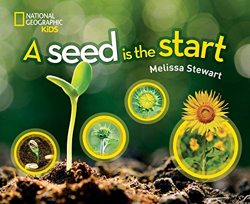 a-seed-is-the-start-science-nature