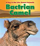 Bactrian Camel (A Day in the Life: Desert…