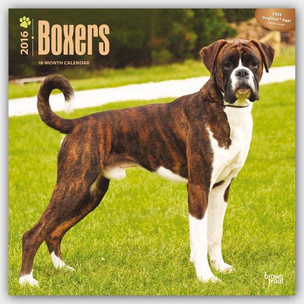 boxers-2016-international-boxer-18-monatskalender-mit-freier-dogdays-app-original-browntrout-kalender-mehrsprachig-kalender-wall-kalender