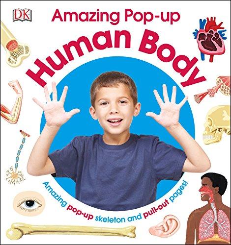 amazing-pop-up-human-body