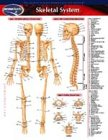 Papertech: Skeletal System (Life Sciences)