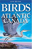 Burrows, Roger: Birds of Atlantic Canada