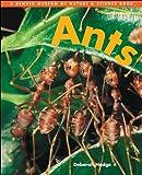 Hodge, Deborah: Ants (Denver Museum Insect Books)