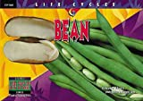 Schwartz, David M.: Bean