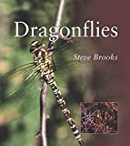 Brooks, Steve: Dragonflies