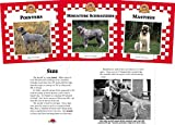 Furstinger, Nancy: Dogs Set 6