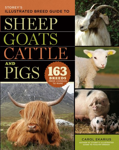 storeys-illustrated-breed-guide-to-sheep-goats-cattle-and-pigs-163-breeds-from-common-to-rare