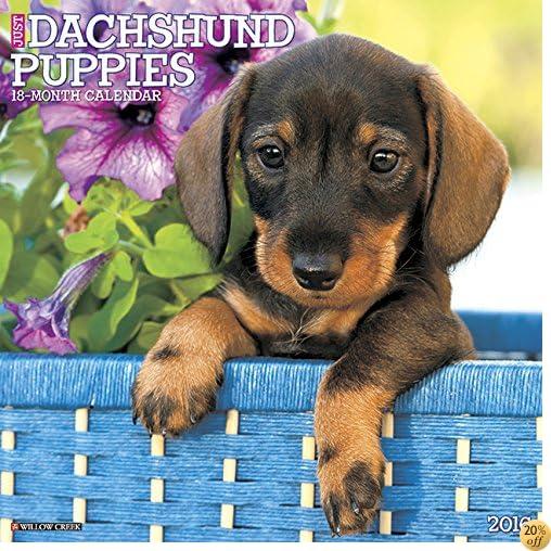 T2016 Just Dachshund Puppies Wall Calendar