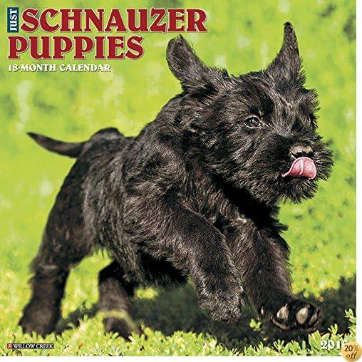 T2016 Just Schnauzer Puppies Wall Calendar