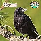 Crows (Backyard Safari) by Steven Otfinoski