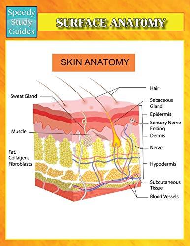 surface-anatomy-speedy-study-guides