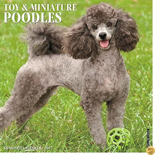TJust Toy & Miniature Poodles 2017 Wall Calendar (Dog Breed Calendars)