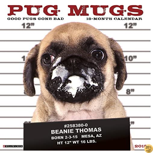 2017 Pug Mugs Mini Wall Calendar