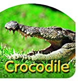 Crocodile Die Cut Board Book