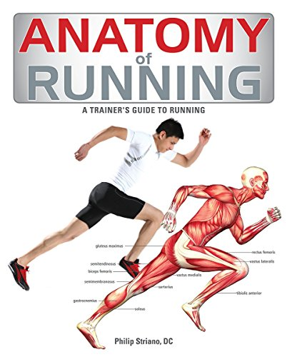 anatomy-of-running-a-trainers-guide-to-running
