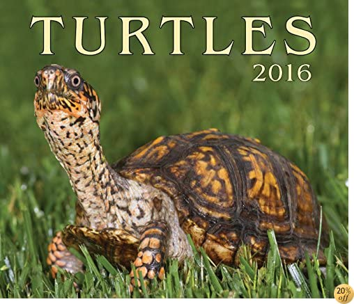 TTurtles 2016