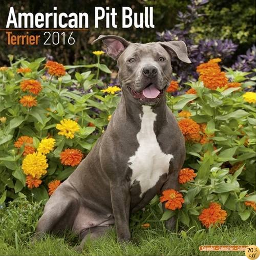 TAmerican Pit Bull Terrier Calendar - Only Dog Breed American Pit Bull Terriers Calendar - 2016 Wall calendars - Dog Calendars - Monthly Wall Calendar by Avonside