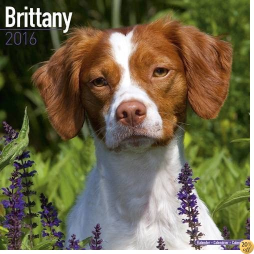 TBrittany Calendar - Only Dog Breed Brittanys Calendar - 2016 Wall calendars - Brittanys Dog Calendars - Monthly Wall Calendar by Avonside