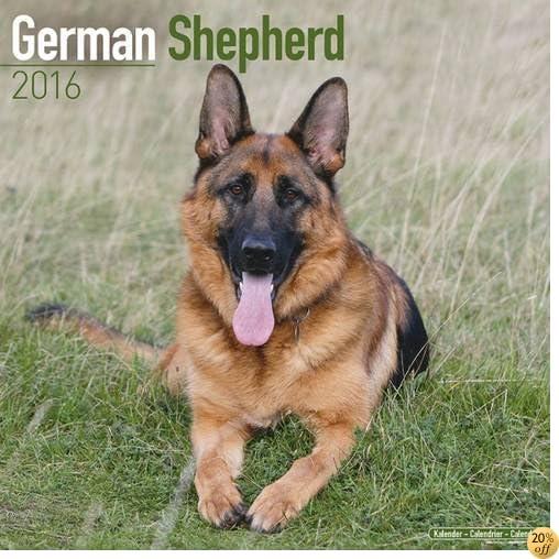 TGerman Shepherd Calendar - Only Dog Breed German Shepherd Calendar - 2016 Wall calendars - Dog Calendars - Monthly Wall Calendar by Avonside