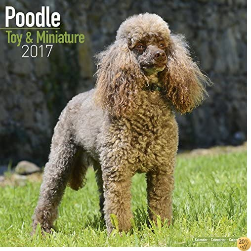 TMiniature Poodle Calendar 2017 - Toy Poodle Calendars - Dog Breed Calendars - 2016 - 2017 wall calendars - 16 Month by Avonside